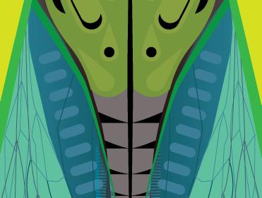 Like the cicada